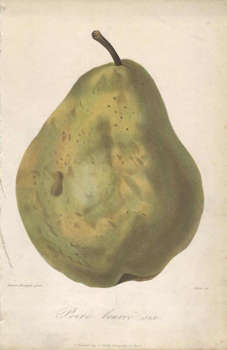 Francois Herincq - Poire buerre six - 1858