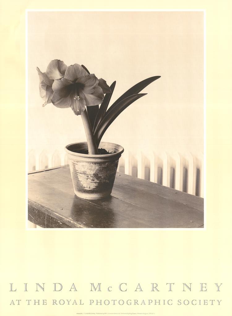 Linda McCartney - Amaryllis - 1983