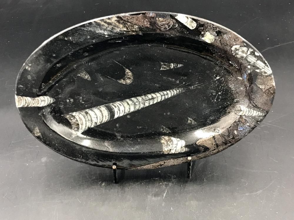 Artifact, fossil, mineral, crystal, gemstone auction