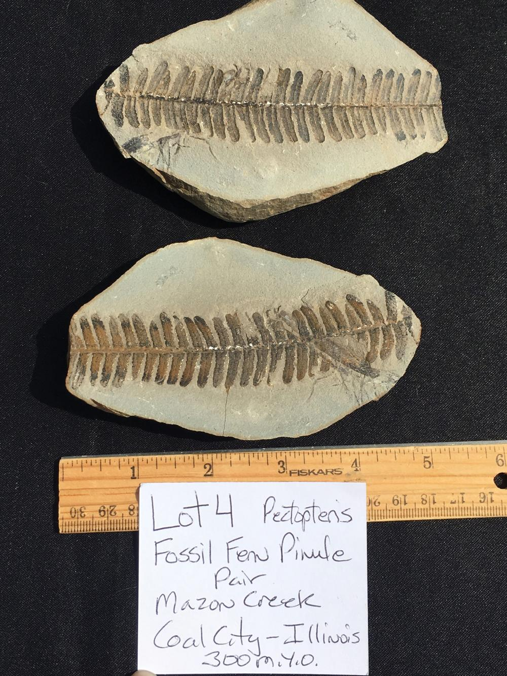 Lot 4: Fern, Rock, Fossil, Natural, Collectible, Specimen, Mazon Creek
