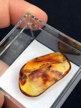Lot 24: Amber. Rock, Fossil, Natural, Collectible, Mineral, Specimen