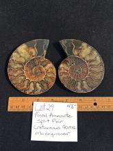 Lot 29: Ammonite, Fossil, Rock, Natural, Specimen, Décor, Collectible