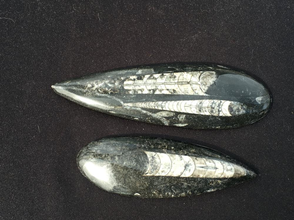 Orthoceras, Rock, Fossil, Natural, Décor, Collectible, Carving