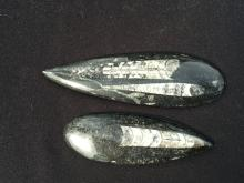Lot 57: Orthoceras, Rock, Fossil, Natural, Décor, Collectible, Carving