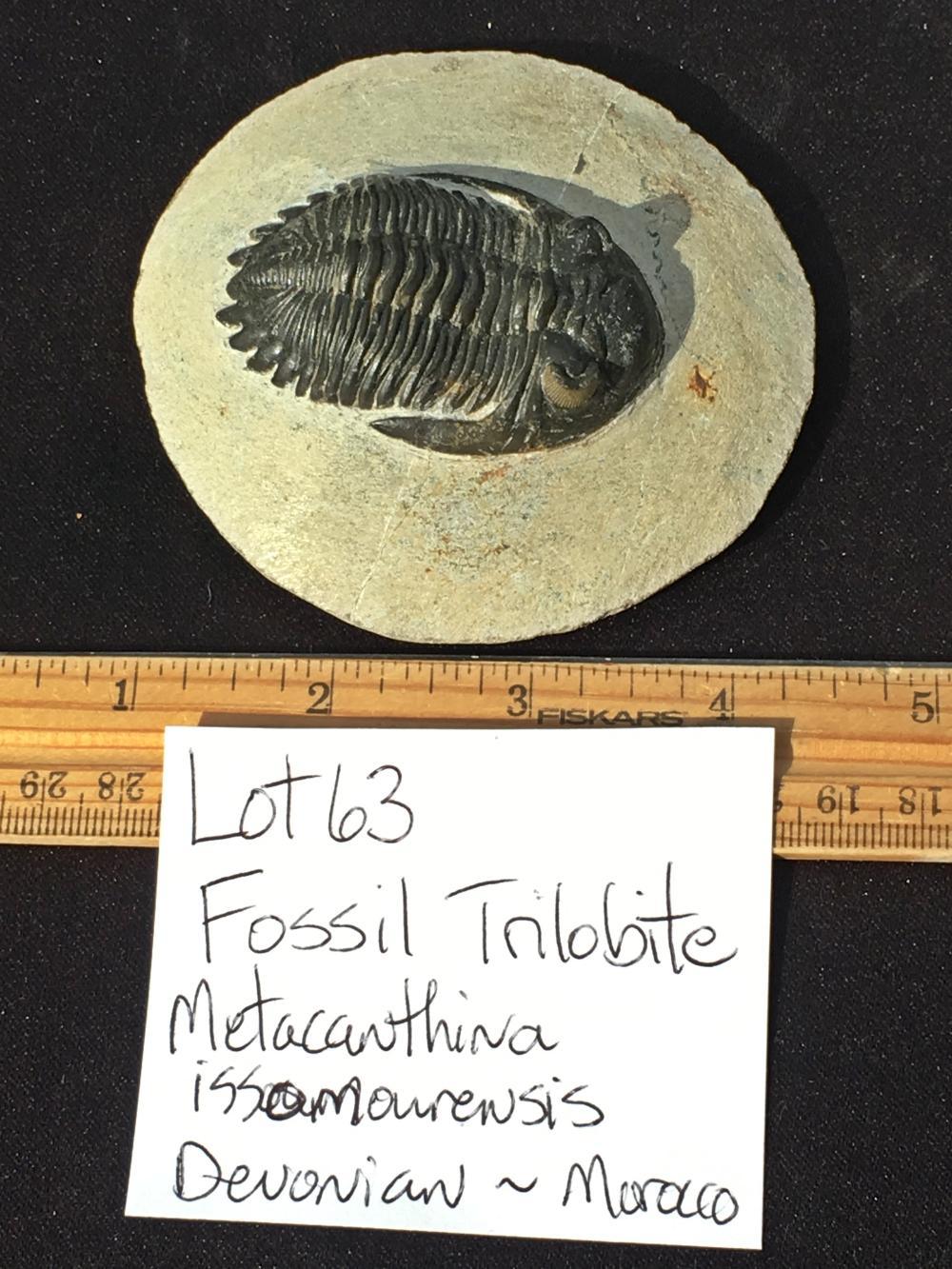 Lot 63: Trilobite, Rock, Fossil, Natural, Specimen