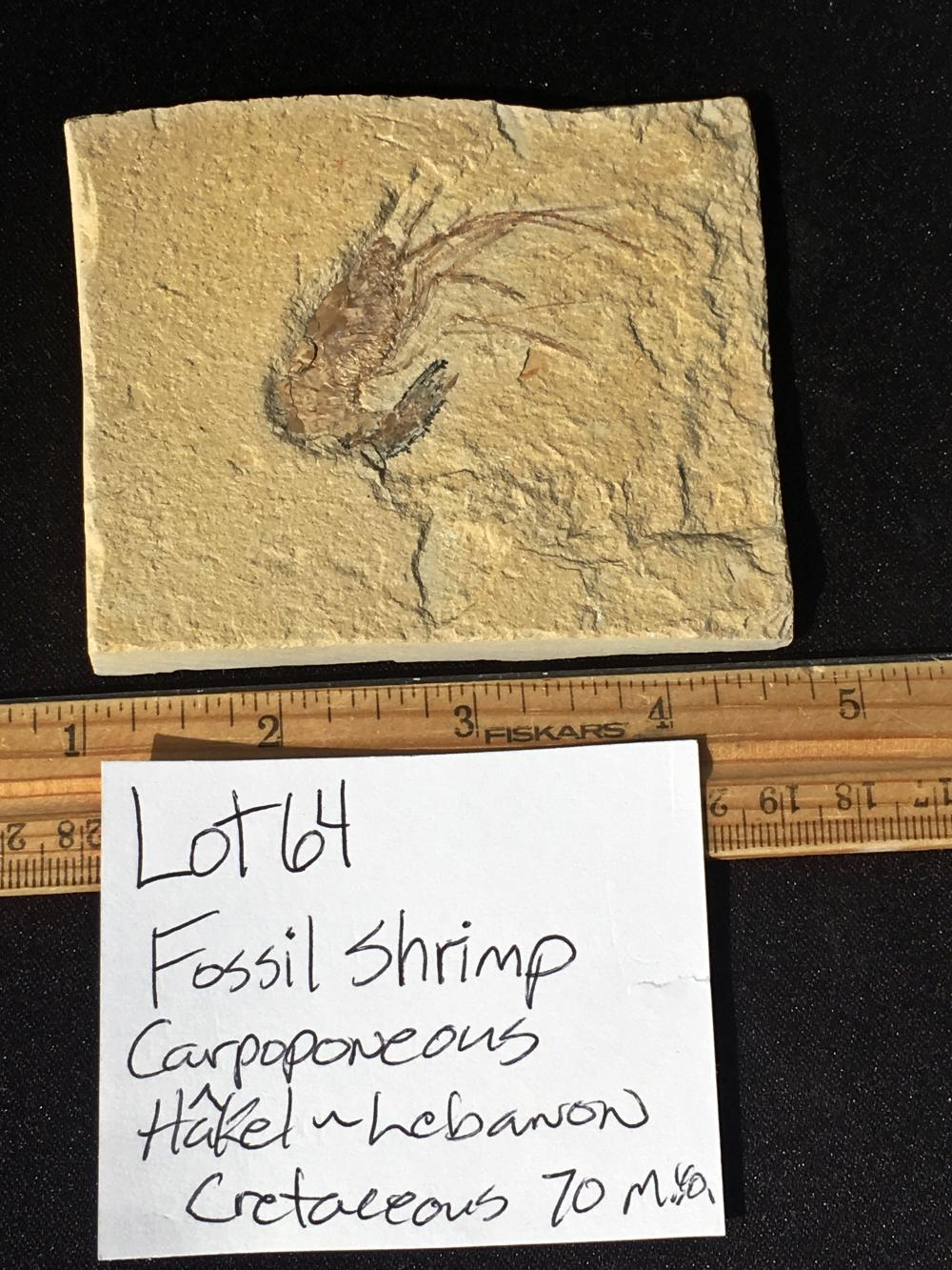 Lot 64: Shrimp, Rock, Fossil, Natural, Collectible, Specimen