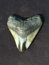 Lot 65: Megalodon, Rock, Fossil, Natural, Collectible, Specimen, Shark