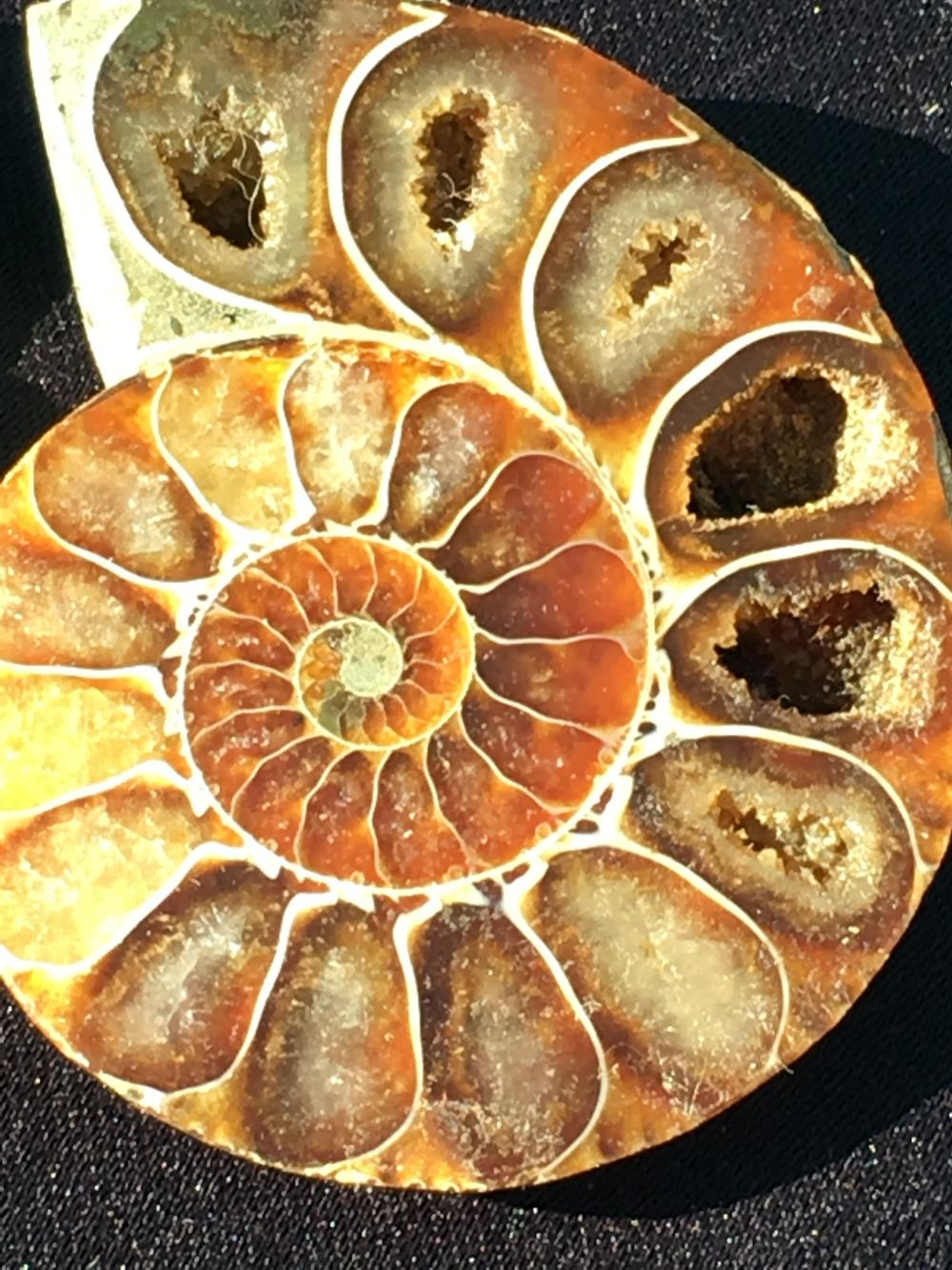 Lot 75: Ammonite, Fossil, Rock, Natural, Specimen, Décor, Collectible