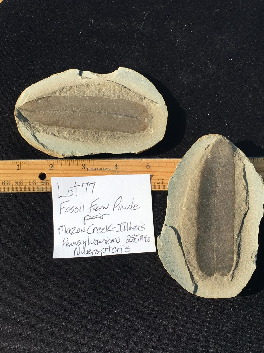 Lot 77: Fern, Rock, Fossil, Natural, Collectible, Specimen, Mazon Creek