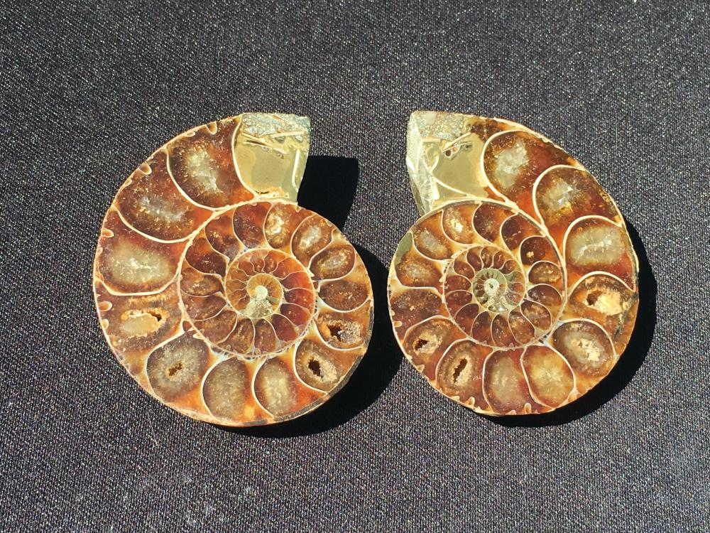 Lot 114: Ammonite, Fossil, Rock, Natural, Specimen, Décor, Collectible