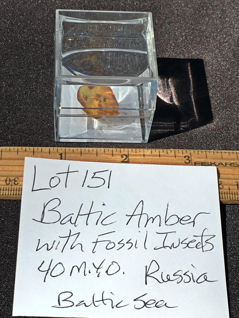 Lot 151: Amber, Fossil, Rock, Natural, Collectible, Specimen,