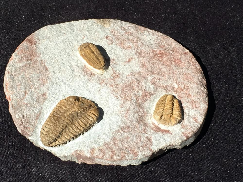 Lot 199: Trilobite, Rock, Fossil, Natural, Specimen