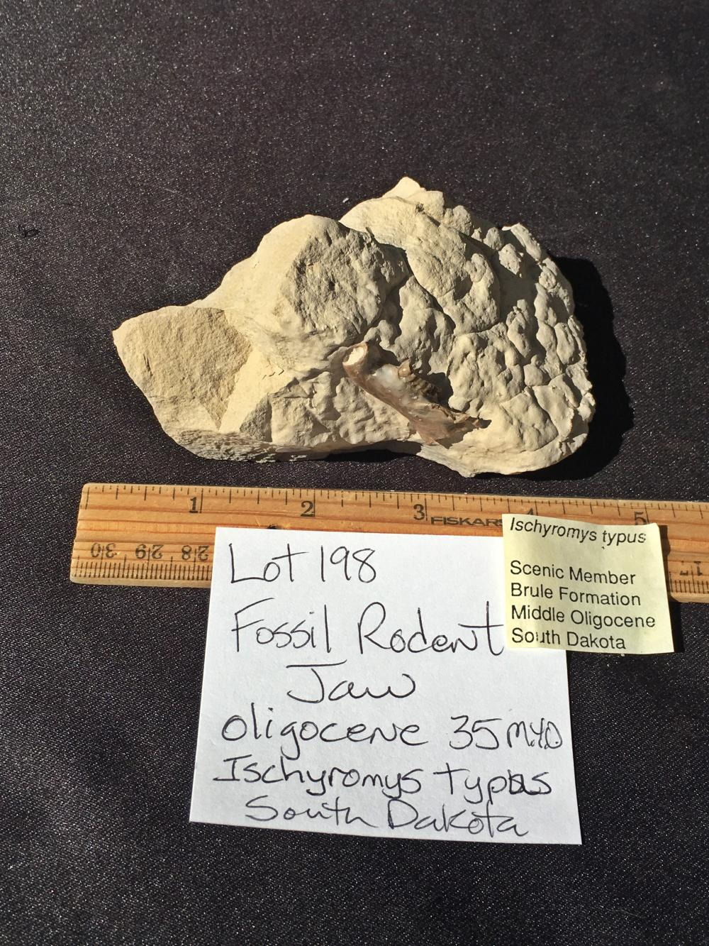 Lot 198: Rock, Fossil, Natural, Collectible, Specimen