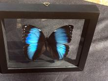 Lot 275: Butterfly, Natural, Collectible, Insect, Art