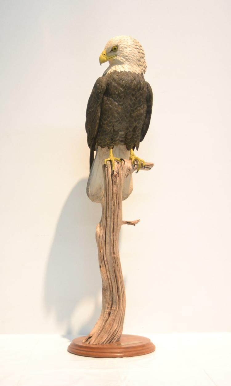 RICHARD KOEDITZ , BALD EAGLE PERCHED ON BRANCH
