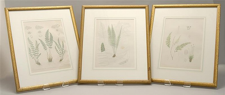 SET OF THREE FRAMED BOTANICAL PRINTS by J.H. Emerton. Made by Armstrong & Co. Lith. 11.75