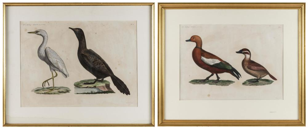 "JACQUES BARRABAND, France, 1767-1809, Two etchings of birds,, Hand-colored etchings on paper, 16.75"" x 22.75"" sight. Framed 27.5"" x..."