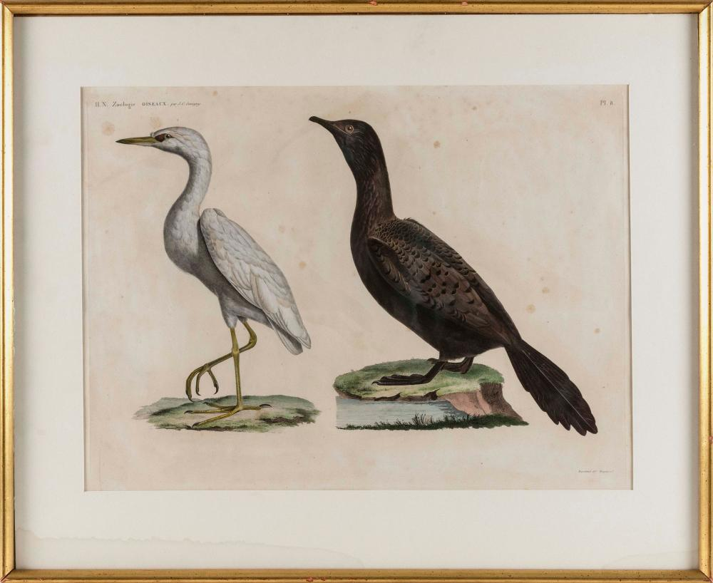 JACQUES BARRABAND, France, 1767-1809, Two etchings of birds,, Hand-colored etchings on paper, 16.75