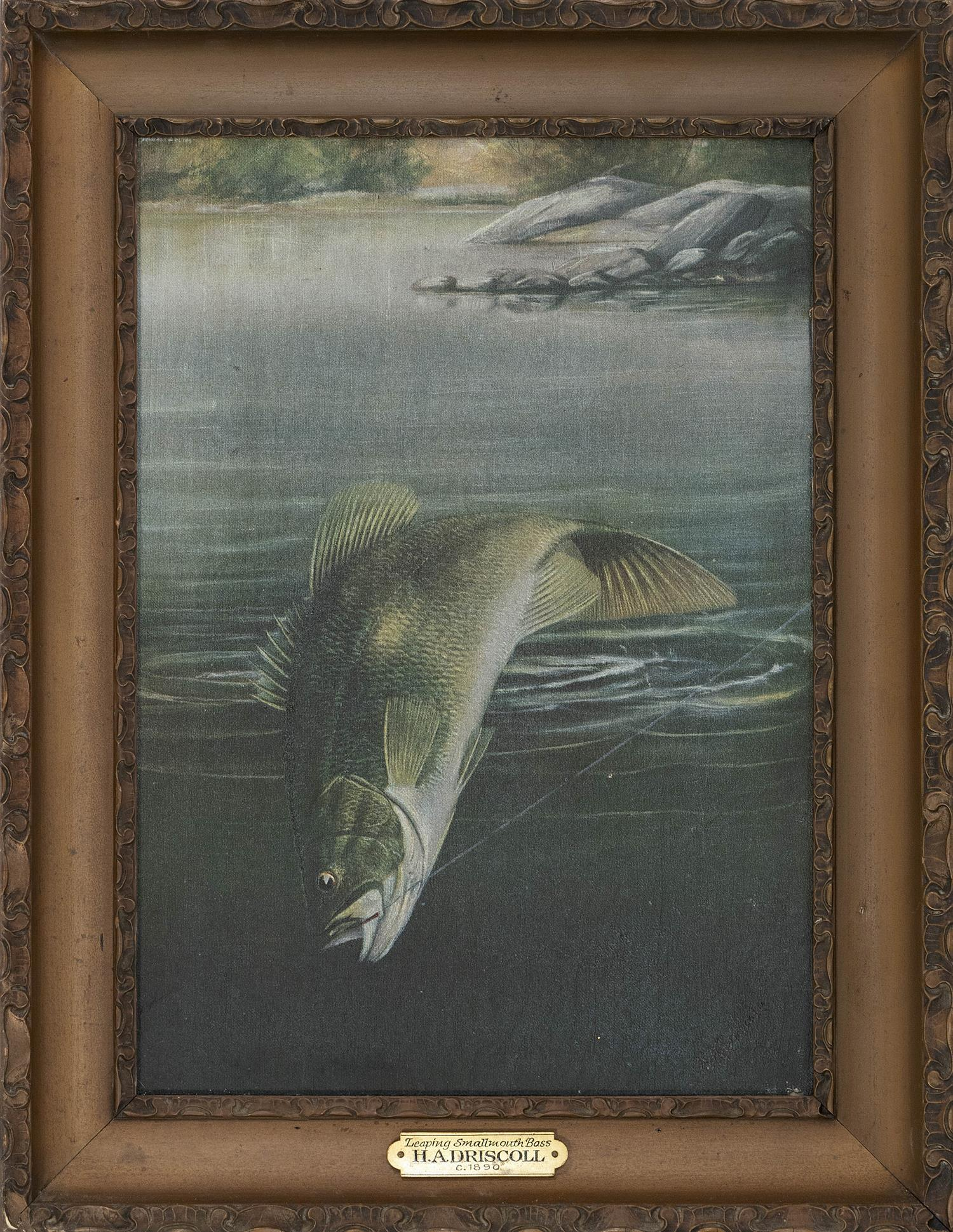 """HARRY A. DRISCOLE, New York, 1861-1923, """"Leaping Smallmouth Bass""""., Oil on canvas, 14"""" x 10"""". Framed 17.5"""" x 13.5""""."""