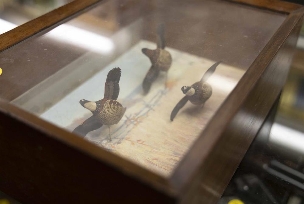 SHADOW BOX DIORAMA OF QUAIL IN FLIGHT BY A.J. DANDO Circa 1934. Depicts three miniature bobwhite quail against a painted landscape o...
