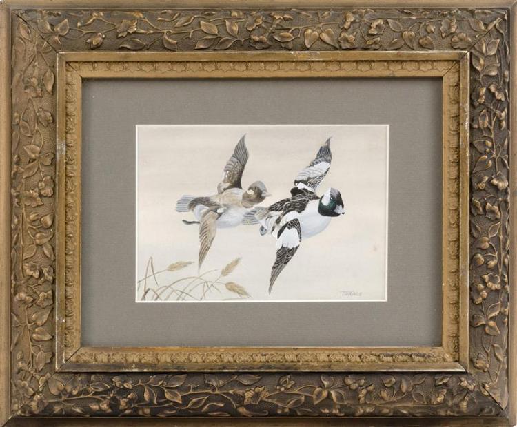 ED TAKACS, Massachusetts, b. 1952, A pair of bufflehead ducks in flight., Acrylic on paper, 5