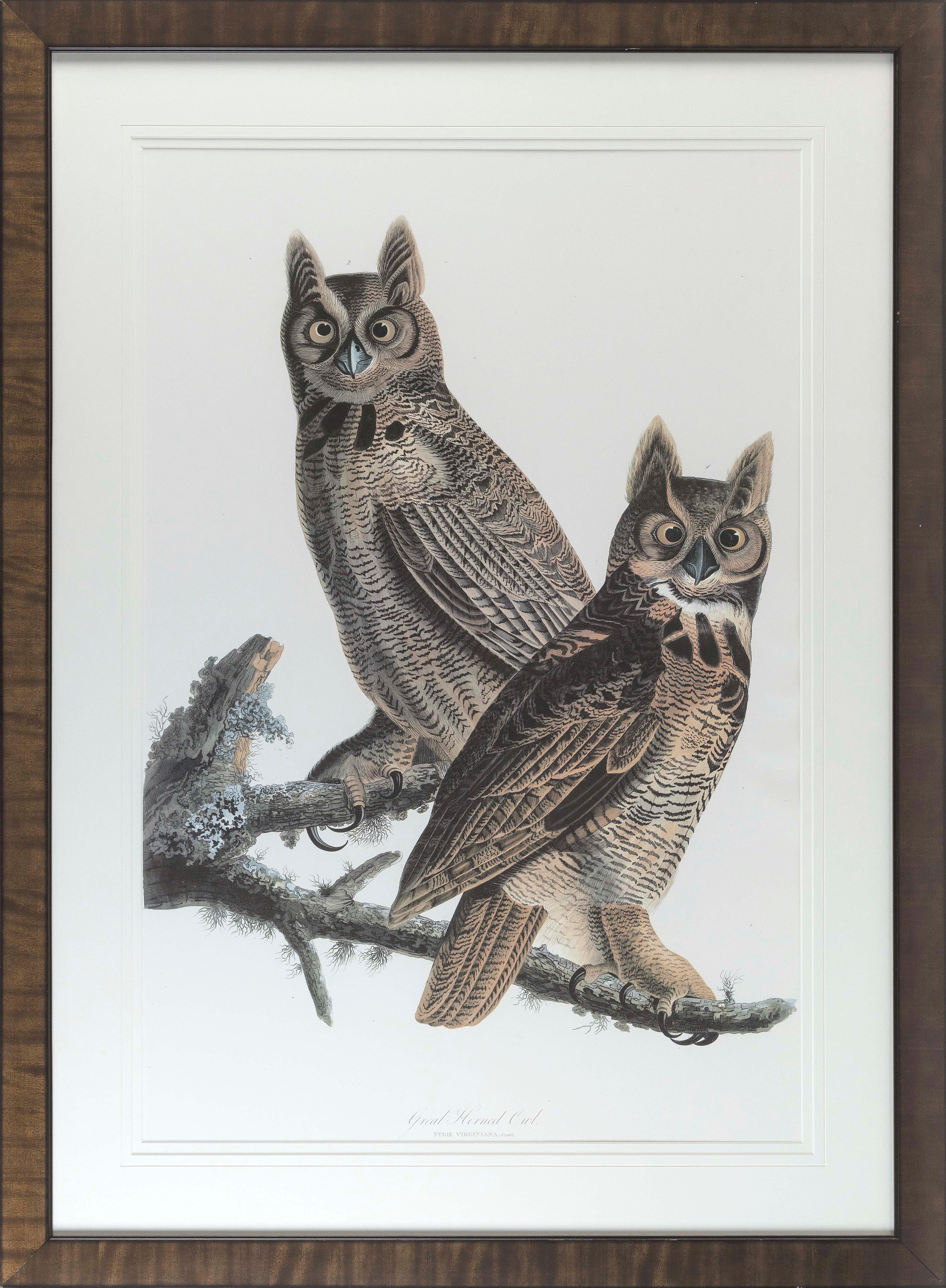 "AUDUBON SOCIETY/ABBEVILLE PRESS PRINT ""GREAT HORNED OWL"" Circa 1985 Full-size facsimile of an original Audubon plate, 35.5"" x 23.5"" sight. Framed 46.5"" x 35""."