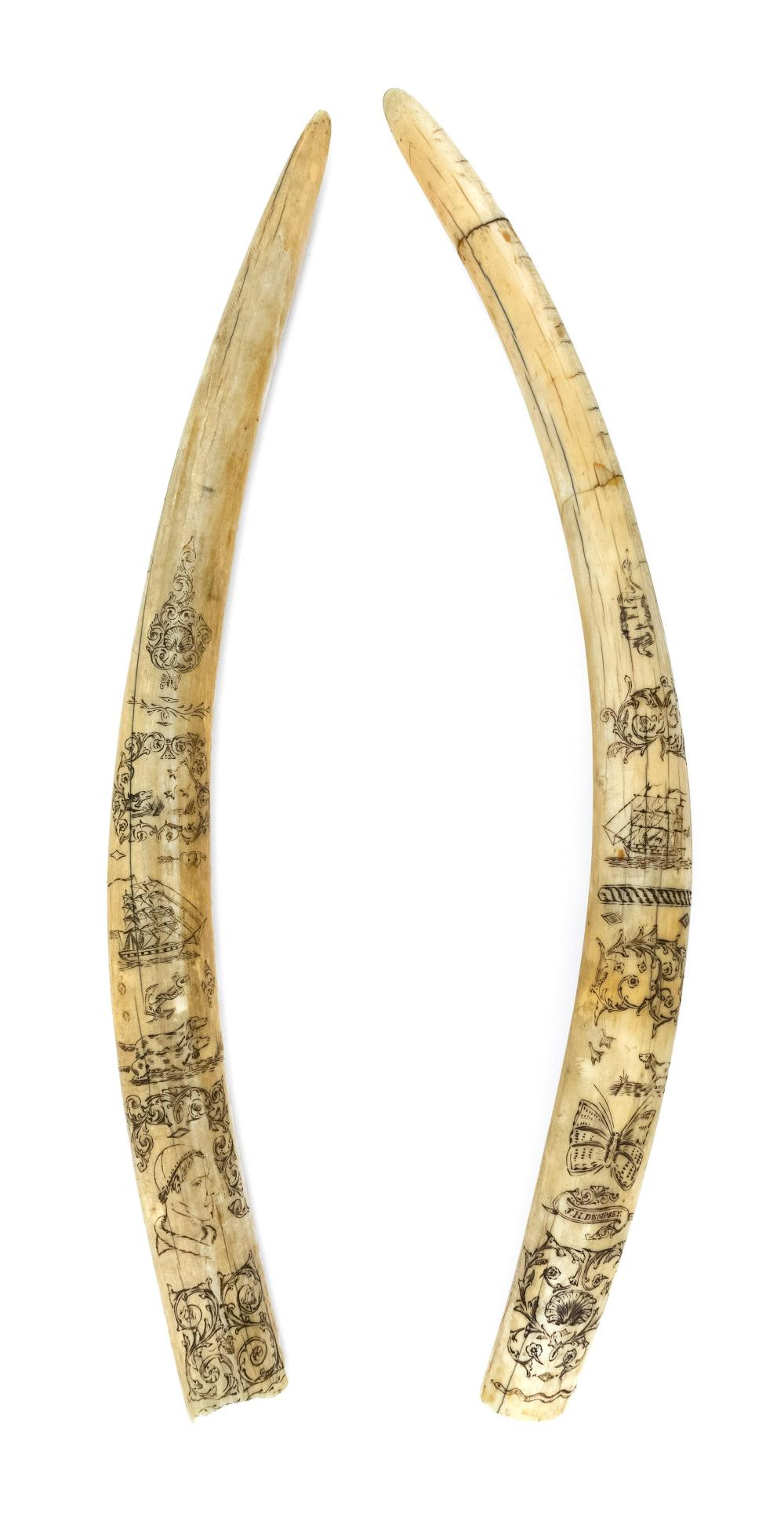 PAIR OF SCRIMSHAW WALRUS TUSKS Depict floral, foliate and shell designs, a bird dog and birds, a heart with an arrow, three-masted s...