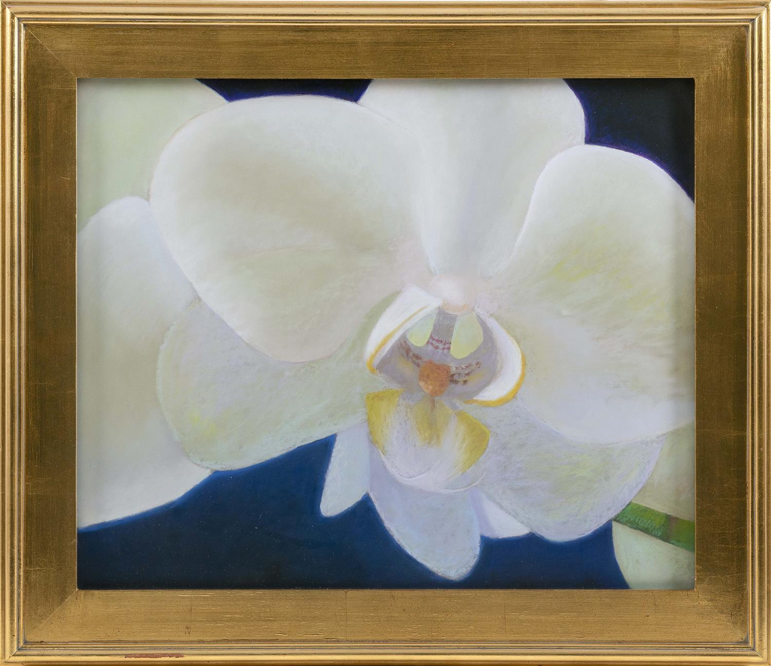 """STEPHANIE O'NEILL, Cape Cod, Contemporary, """"Nelle's Orchid""""., Pastel on Wallis paper, 20"""" x 24"""". Framed 25.5"""" x 30""""."""