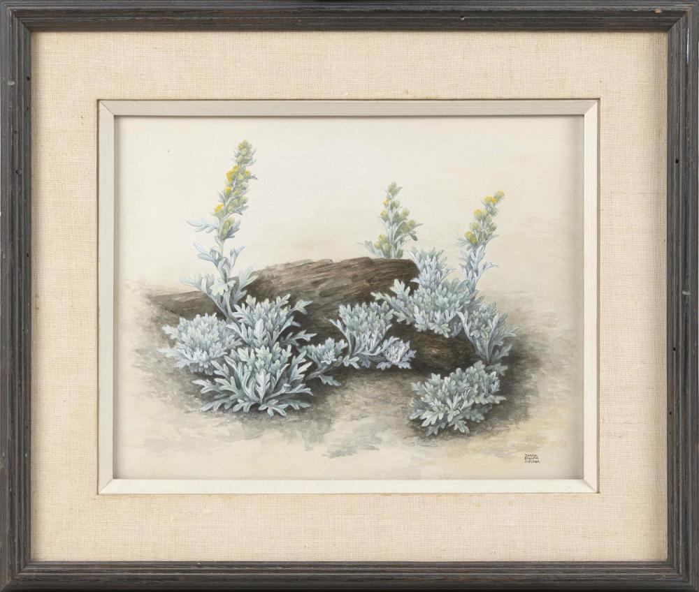 "MARCIA GAYLORD NORMAN, Cape Cod, 20th Century, Dusty miller., Watercolor and gouache, 10"" x 14"" sight. Framed 16.5"" x 20""."