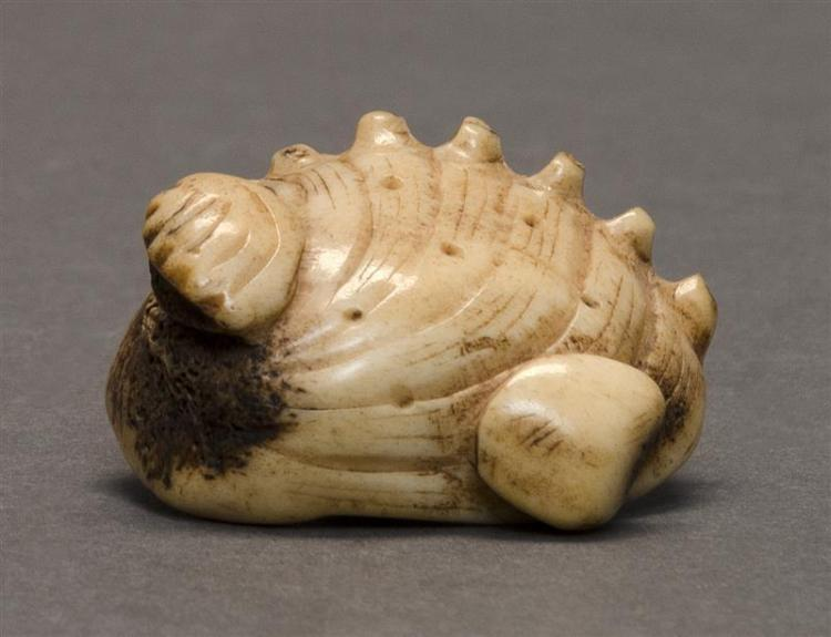 BONE NETSUKE In the form of an awabi shell with other smaller shells. Length 1.75