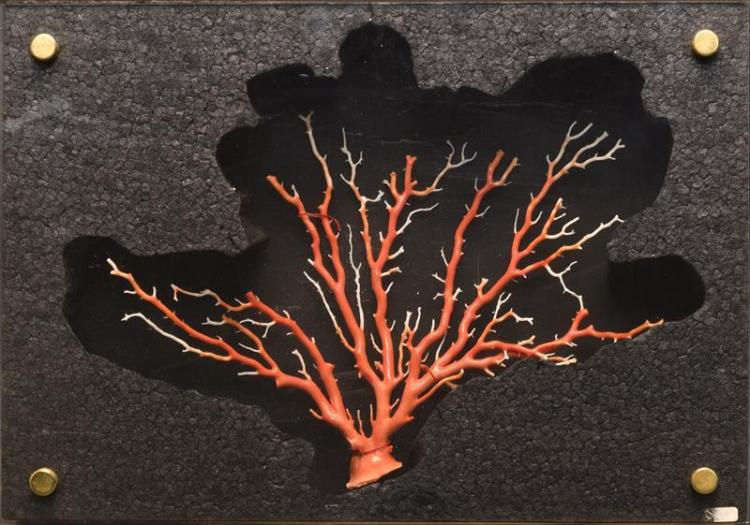 BRANCH CORAL OBJECT Length 12.5