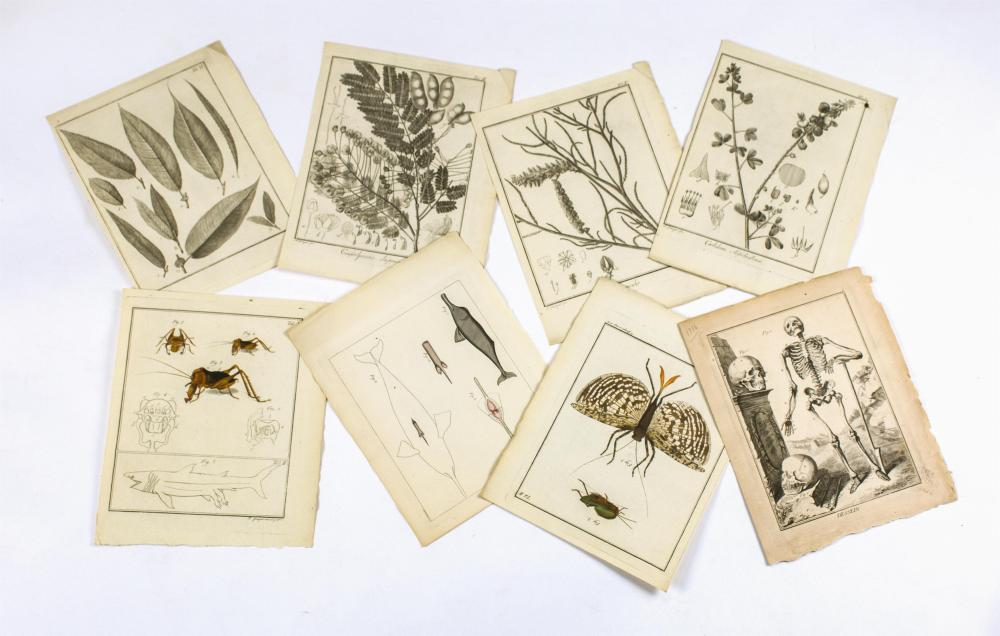 """EIGHT BOTANICAL AND ANIMALIA ETCHINGS All approx. 10.25"""" x 8"""". All unframed."""