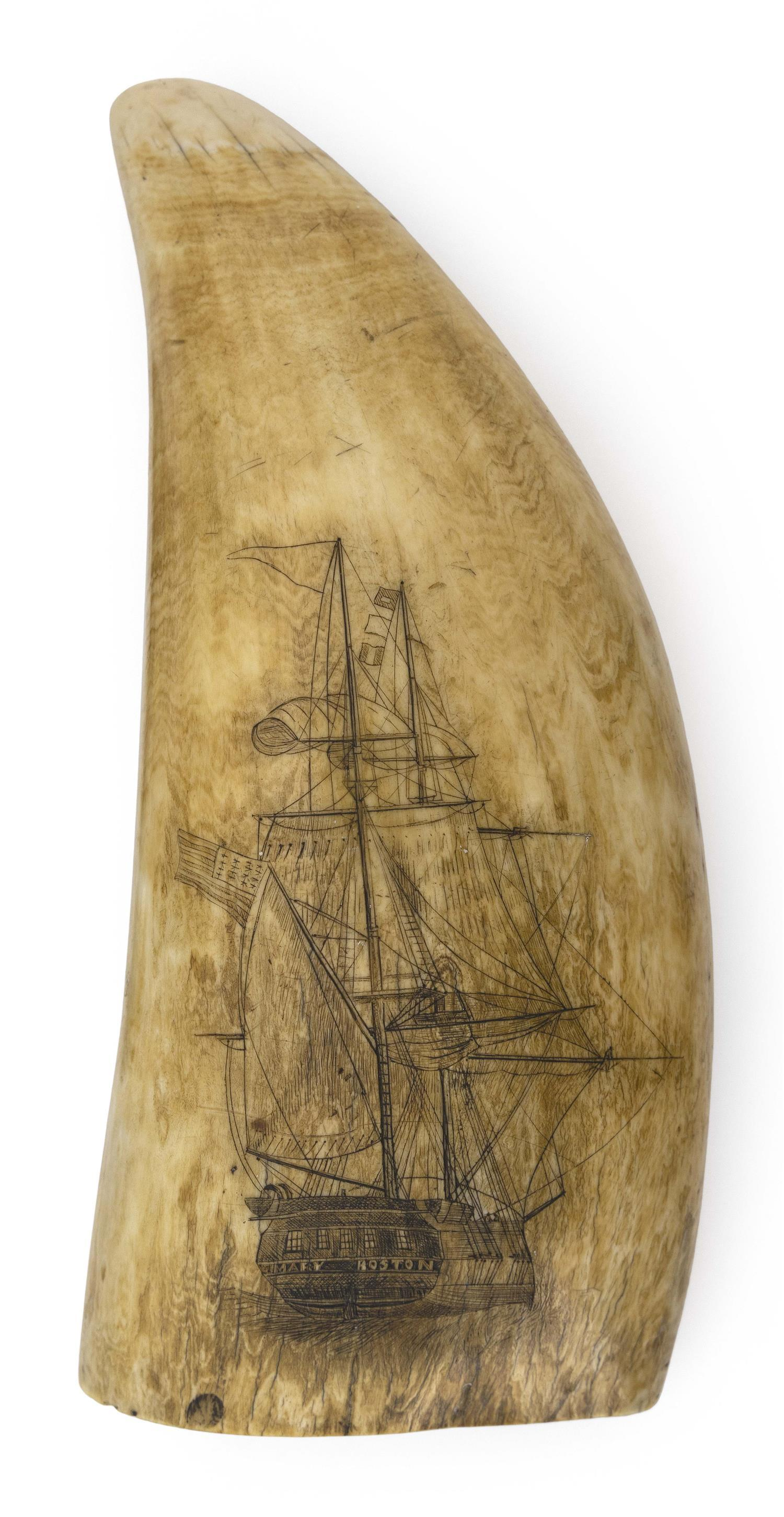 LARGE SCRIMSHAW WHALE'S TOOTH WITH SHIP PORTRAITS Obverse depicts a bow-view portrait and reverse depicts a stern-view portrait of t..