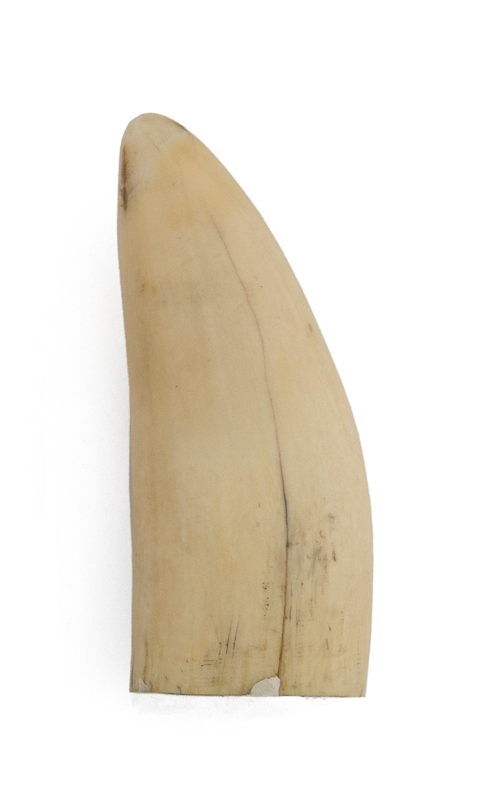 * ENGRAVED WHALE'S TOOTH WITH MARITIME MOTIFS Depicts a harpoon above a portrait of a ship contained within a decorative rectangular..