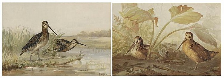 TWO FRAMED CHROMOLITHOGRAPHS By Alexander Pope, Jr. 1) Pair of godwits. 2) Pair of woodcock. 13½