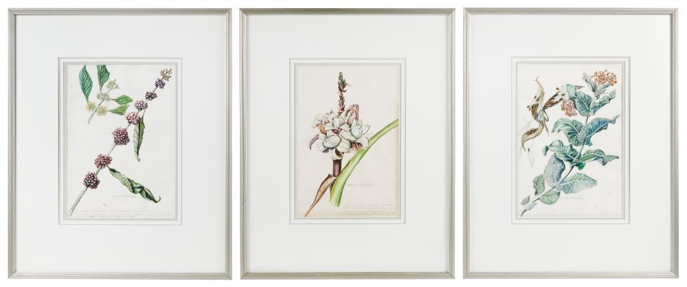 "EDITH F. JOHNSTON (Iowa, 1890-), Set of three botanicals:, Watercolors on paper, 14"" x 9.5"" sight. Framed 24"" x 19""."