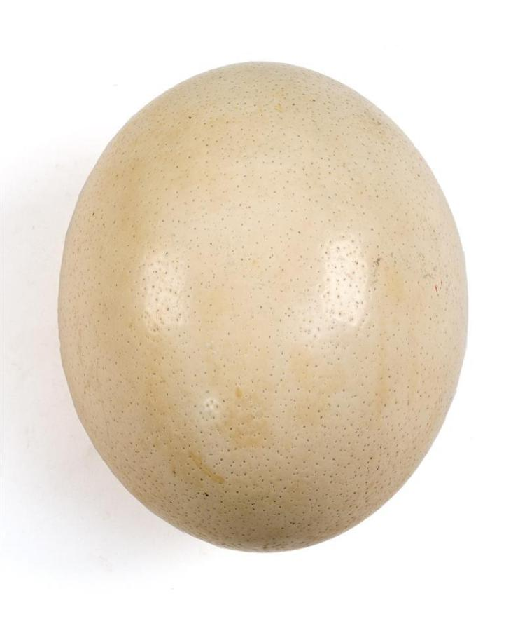 "OSTRICH EGGSHELL With two holes. Length 6""."