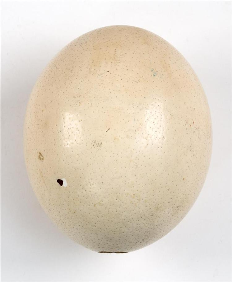 OSTRICH EGGSHELL With two holes. Length 6