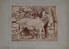 Adolphe BRAUN (1812-1877). Jeune fermier et son baudet. Vers 1868. epreuve d epo