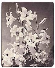 Adolphe BRAUN (1812-1877). Fleurs de lys. 1853. Épreuve d'époque sur papier salé