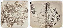 Adolphe BRAUN (1812-1877). Études de fleurs. Vers 1853-1855. 20 épreuves d'époqu