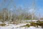 POUSSOVSKY Vladimir. La dernière neige. Huile sur carton. 19x27 cm