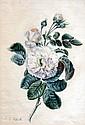 Pierre-Joseph REDOUTÉ (1759-1840) (d'après). Branche de rosier. Aquarelle.