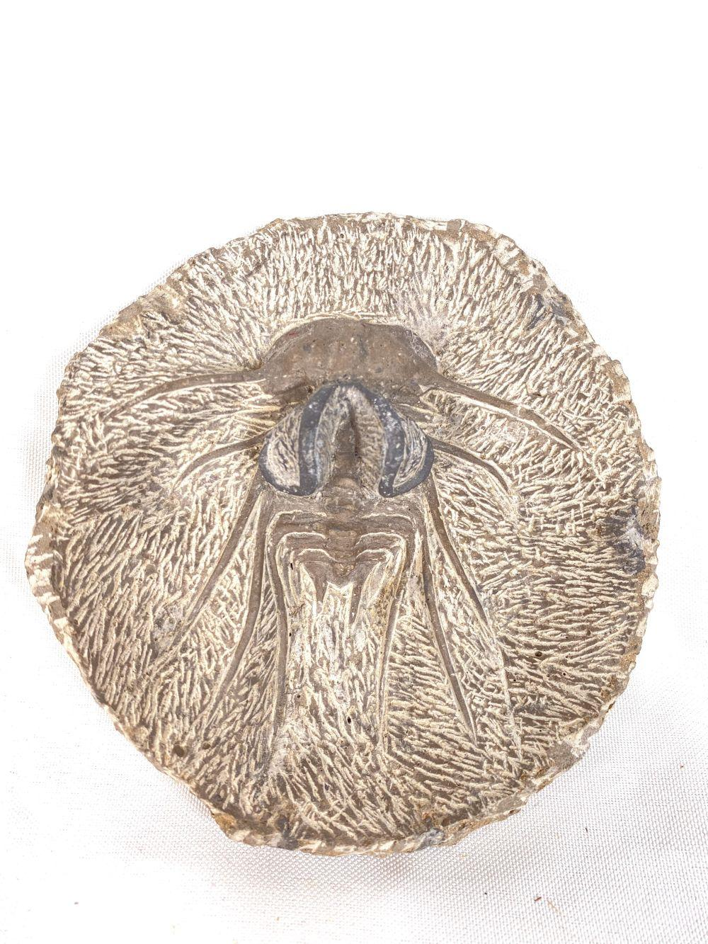 Early Stone Fossil Scarab