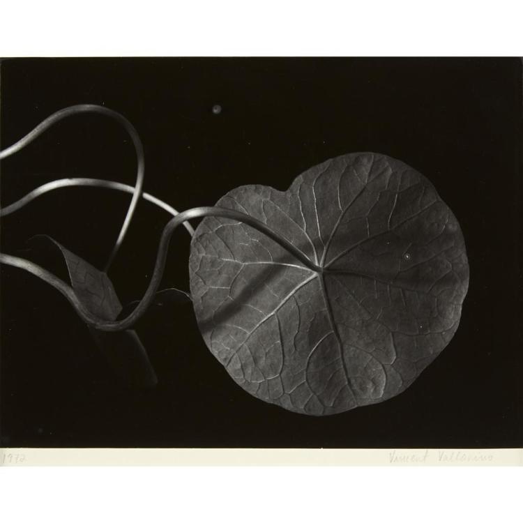 VINCENT VALLARINO, (AMERICAN B. 1953), PLANT STUDY, NASTURTIUM