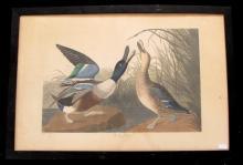 3 pieces. Havell, Robert after Audubon, John James. Hand-Colored Engraving with Aquatint. Folio plates: