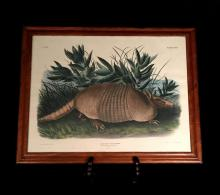 1 Piece. Hand-Colored Lithograph. Audubon, J. W. Nine-Banded Armadillo. Philadelphia: J. T. Bowen, 1848. (Plate, 146, Audubon, John...