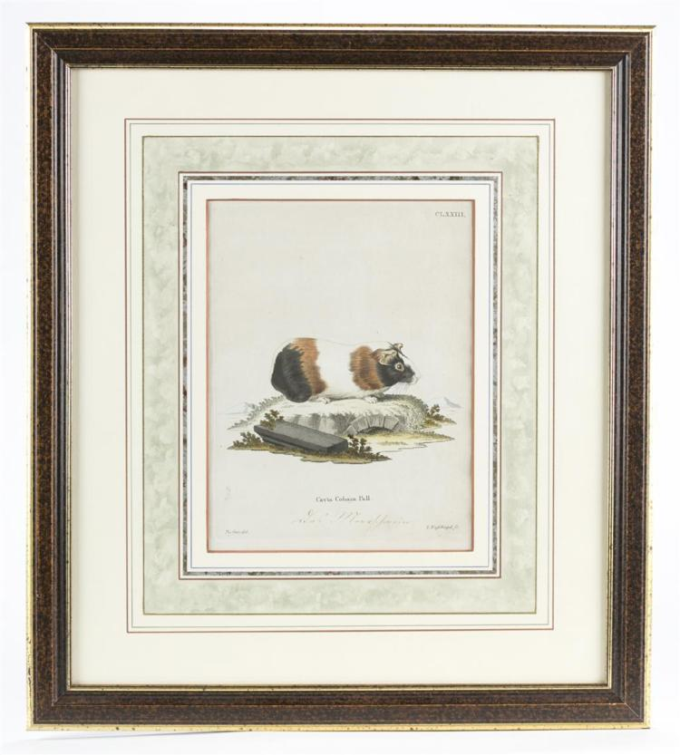 An assortment of four hand-colored engravings, circa 1800