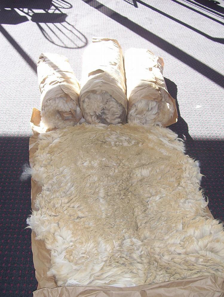 4 fleeces Beige Grade 1&3,