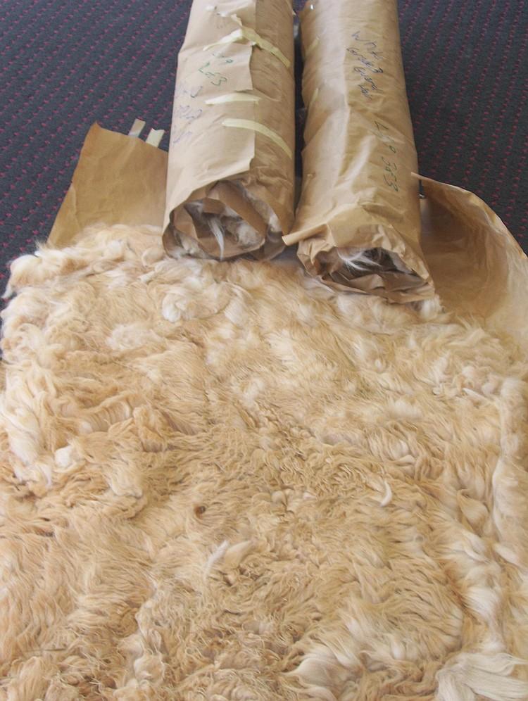 3 fleeces grade 2&3